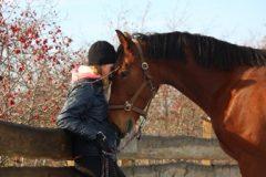 Human-horse mind meld